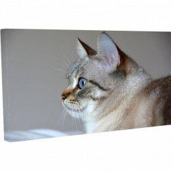 Tablou Canvas Pisica la TV 20 x 30 cm Tablouri