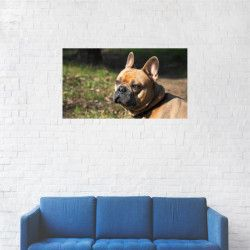 Tablou Canvas Portret Bulldog francez 20 x 35 cm Tablouri