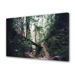 Tablou Canvas Premium Peisaj Multicolor Copac prabusit in padure Decoratiuni Moderne pentru Casa 80 x 160 cm Tablouri