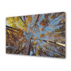 Tablou Canvas Premium Peisaj Multicolor Copaci vazuti de jos Decoratiuni Moderne pentru Casa 80 x 160 cm Tablouri