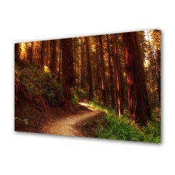 Tablou Canvas Premium Peisaj Multicolor Drum luminos printre copaci Decoratiuni Moderne pentru Casa 80 x 160 cm Tablouri
