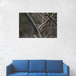 Tablou Canvas Randunica din copac Alb-Negru 20 x 30 cm Tablouri