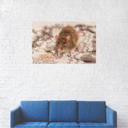 Tablou Canvas Soricel pe patura 40 x 60 cm Tablouri