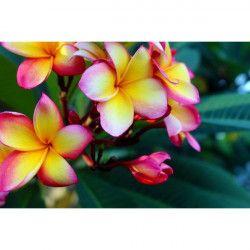 Tablou Canvas Temple Flowers 60 x 45 cm Rama lemn Multicolor Tablouri