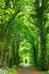 Tablou Canvas Cararea verde 60 x 90 cm Rama lemn Multicolor Tablouri