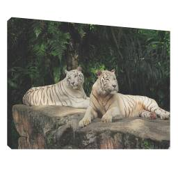 Tigru 1 - Tablou canvas - 52x70 cm Tablouri