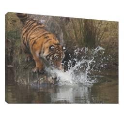 Tigru 3 - Tablou canvas - 52x70 cm Tablouri