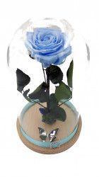 Trandafir Criogenat mare albastru pe pat de muschi in cupola mare de sticla