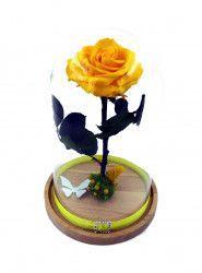 Trandafir Criogenat mare galben pe pat de muchi in cupola mare de sticla