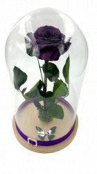 Trandafir criogenat mare Wide Flowers mov pe pat de muschi in cupola mare de sticla