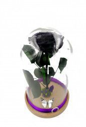 Trandafir Criogenat Wide Flowers gigant mov pe pat de muchi in cupola mare de sticla