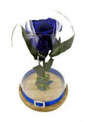 Trandafir Natural Criogenat Wide Flowers albastru royal pe pat de muchi in cupola mica de sticla